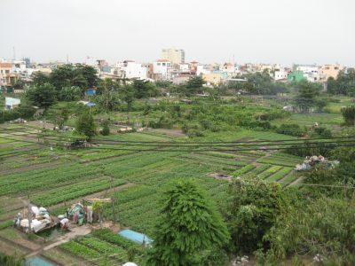 Vườn rau Lộc Hưng quận Tân Bình